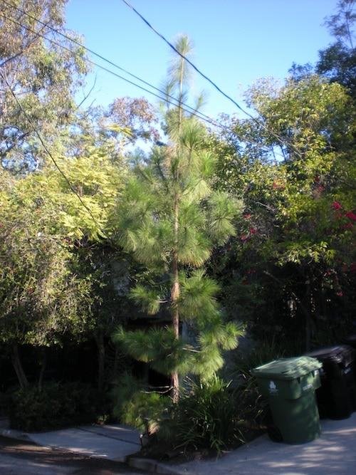 Lynn's Tree